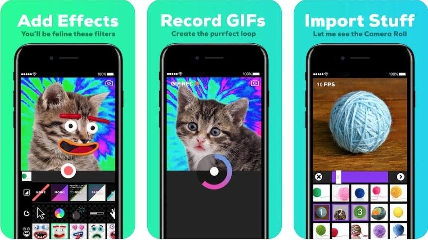 Bạn có thể tạo và chia sẻ nhiều ảnh GIF ngộ nghĩnh