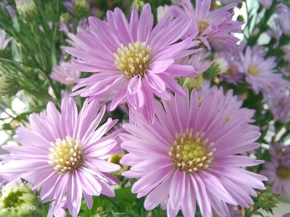 Ảnh chụp cận cảnh những bông hoa siêu yêu