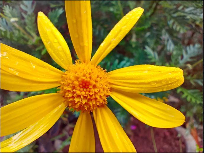 Ảnh chụp cận cảnh bông hoa bằng điện thoại camera đẹp vivo Y19
